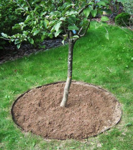 Приствольный круг для растений