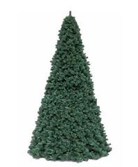 Ель Royal Christmas Giant Trees 580 см