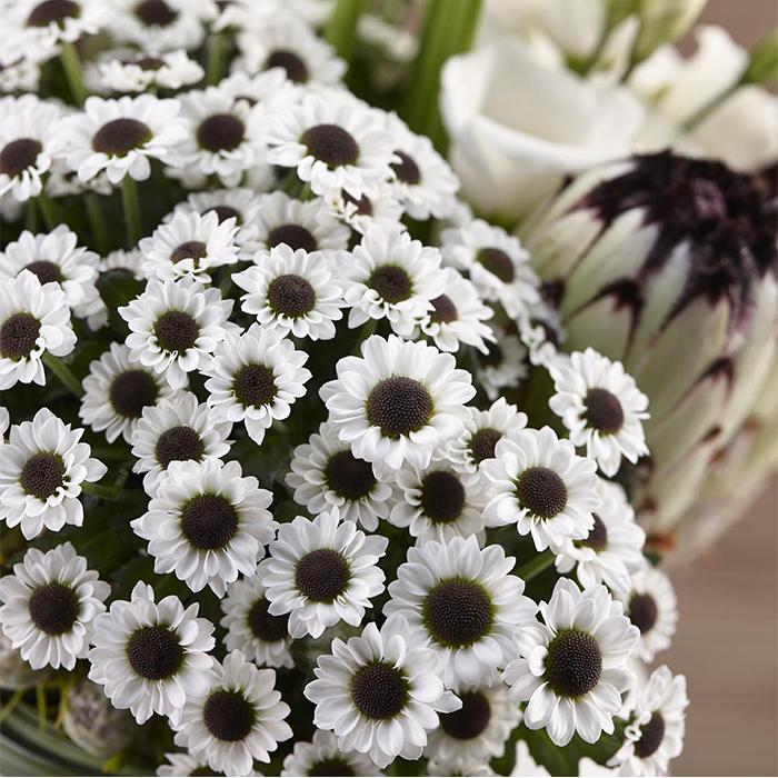 Купить ромашковые хризантемы черно белые Инь Ян в Перми