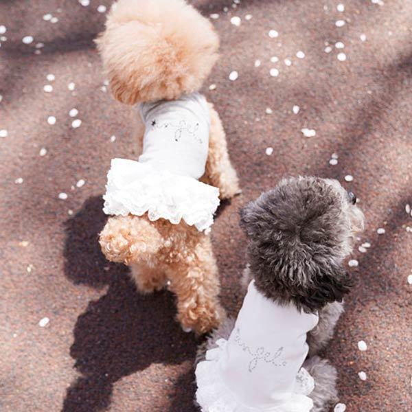 платья для собак маленьких пород фото