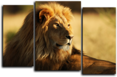 "Модульная картина ""Взгляд льва"""