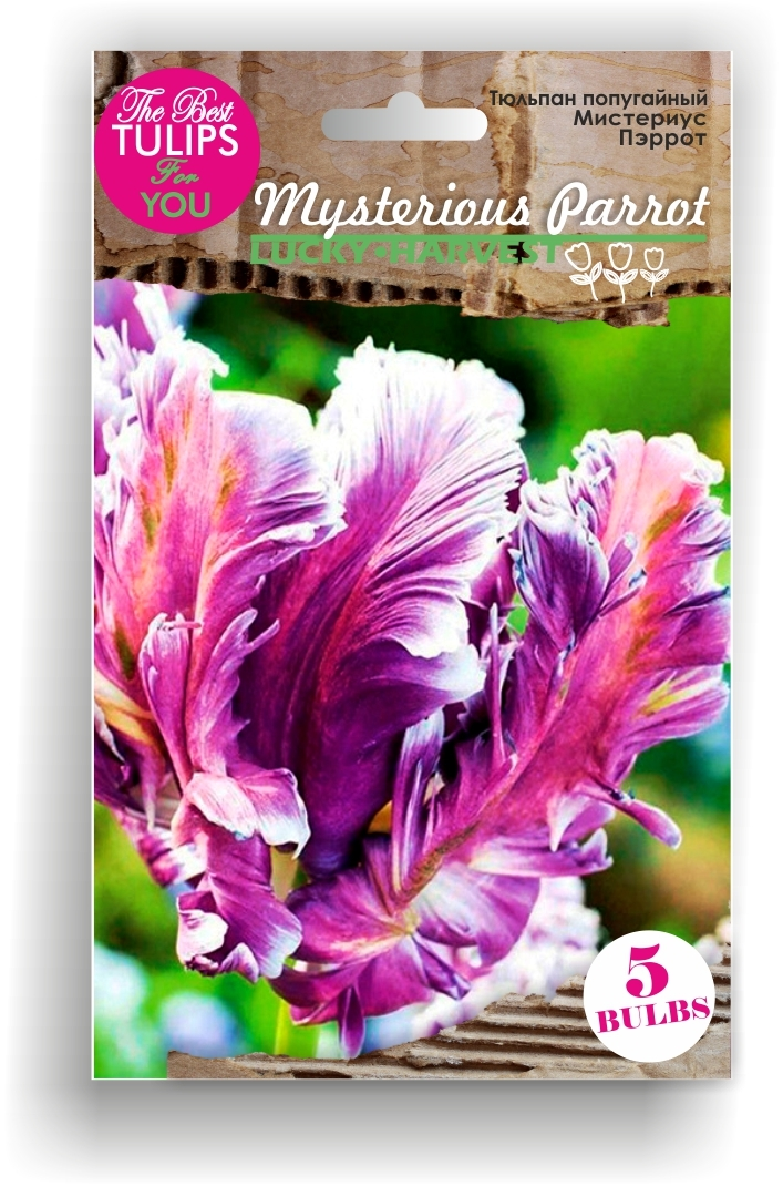 Тюльпан Попугайный Mysterious Parrot (Мистериус Пэррот) Украина 5 шт