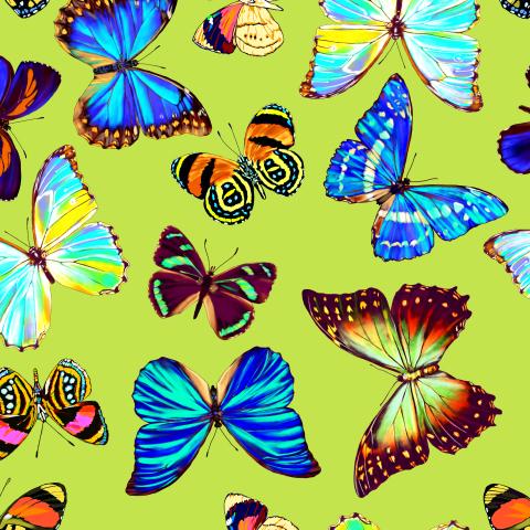 тропические бабочки_02
