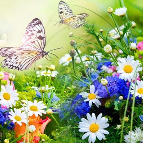 Полевые цветы, отдушка (США) 50мл