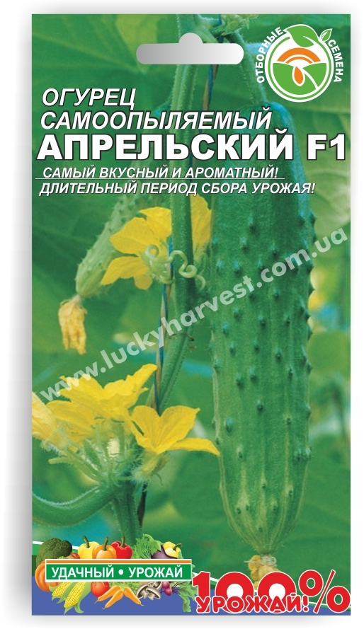 Семена самоопыляемого салатного огурца