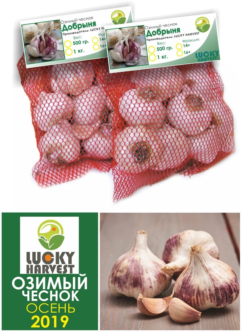 Озимый чеснок Добрыня     1 кг. LUCKY HARVEST (Украина)
