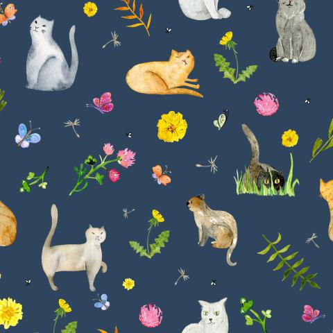 Луговые коты на темном фоне