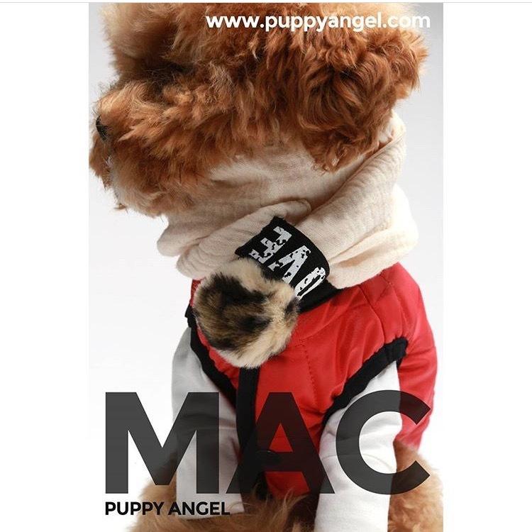 гламурные куртки для собак