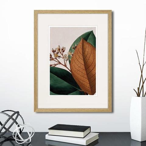 Генри Чарльз Эндрюс - Exotic plants of the world №14, 1815г.