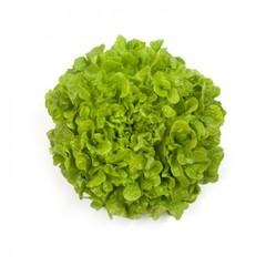 Кирибати семена салата дуболистного (Rijk Zwaan / Райк Цваан)