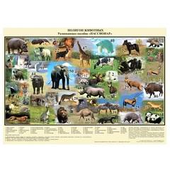 Полигон Животные Ступеньки Творчества 054-1