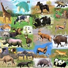 Полигон Животные, настенный плакат