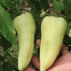 Аккорд А1 семена перца сладкого (Hazera / Хазера)