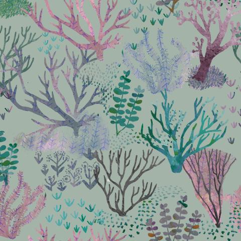 водоросли. seaweed