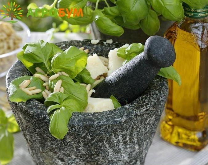 Купить семена Базилик Зеленый ароматный 0,3 г по низкой цене, доставка почтой наложенным платежом по России, курьером по Москве - интернет-магазин АгроБум