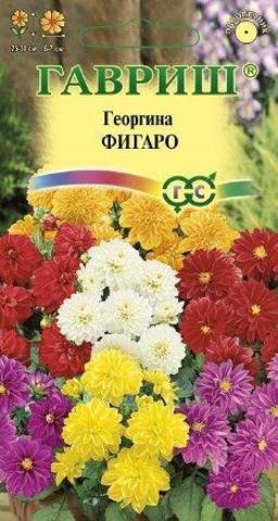 Семена Георгина Фигаро одн