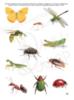 Рабочая тетрадь для детей 2-3 лет «Ознакомление с природой». Маркер в комплекте (зелёный)