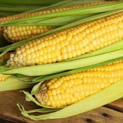 Саммер Cвит F1 семена кукурузы (Syngenta / Сингента)