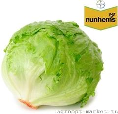 Куала семена салата айсберг (Nunhems / Нюнемс)