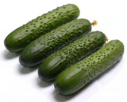 Огурец Спино F1 семена огурца партенокарпического (Syngenta / Сингента) Спино_F1_семена_овощей_оптом.jpg