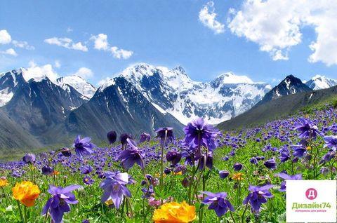 Алтайские травы - отдушка косметическая, 10 мл