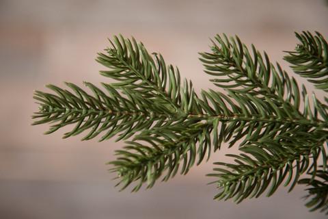Искусственная елка Шервуд Премиум 215см зеленая