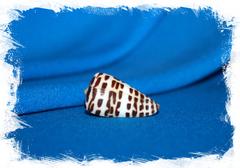 Конус эбурнеус (Conus eburneus)