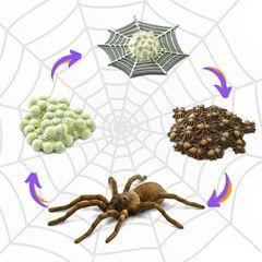 Набор фигурок Жизненный цикл паука Safari Ltd 100406