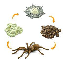 Жизненный цикл паука Safari Ltd реалистичные фигурки
