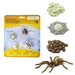 Фигурки Жизненный цикл паука Safari Ltd 100406