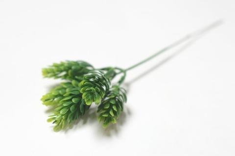 Ветка хмеля зеленая