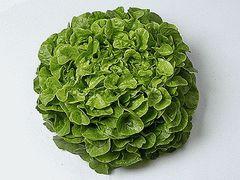 Визирь семена салата дуболистного (Enza Zaden / Энза Заден)
