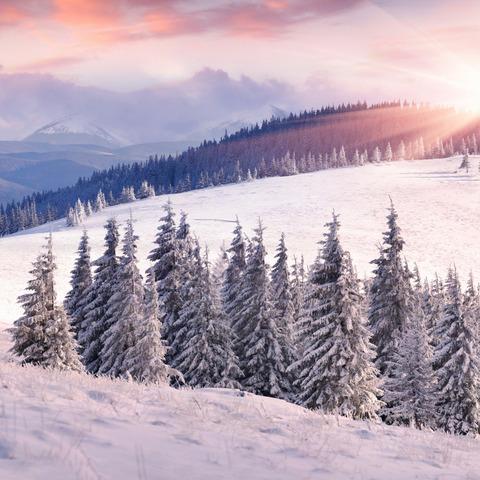 Алмазная Мозаика + Багет 40x50 Заснеженный лес и горы