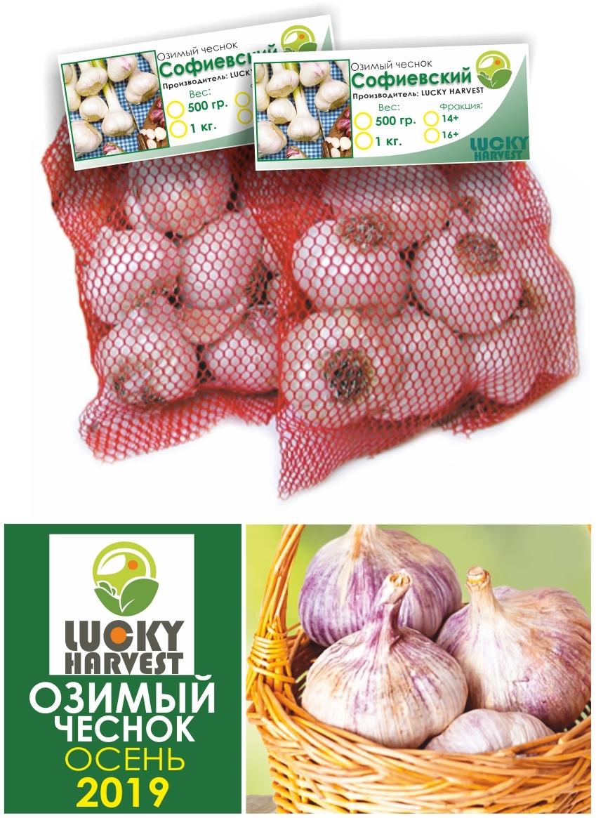 Озимый чеснок Софиевский крупный 1 кг