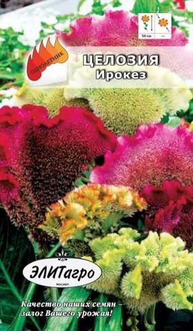 Семена Целозия Ирокез, Одн