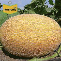 Делано F1 семена дыни (Nunhems / Нюнемс)