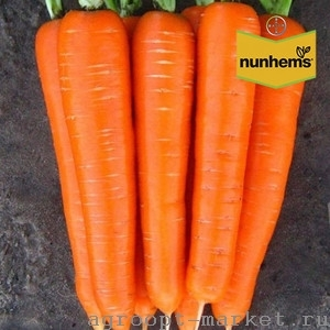 Nunhems Лагуна F1 семена моркови нантской (Nunhems / Нюнемс) лагуна.jpg