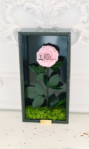 Стабилизированная Роза в Картине Premium Оптом Размер*Бутон (44х22х8см*11см) Цвет нежно розовая