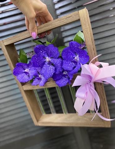 Орхидея Ванда в деревянной рамке  #20735