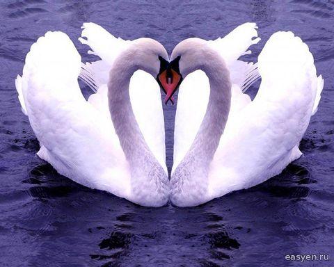 Алмазная Мозаика 40x50 Пара влюбленных лебедей (арт. SGL70051 )