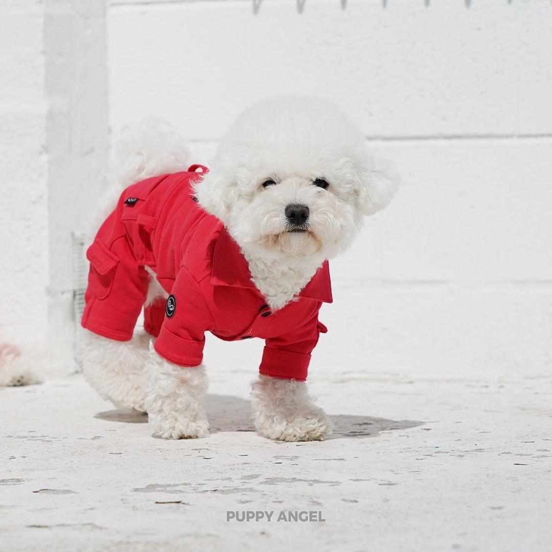костюм для маленькой собаки