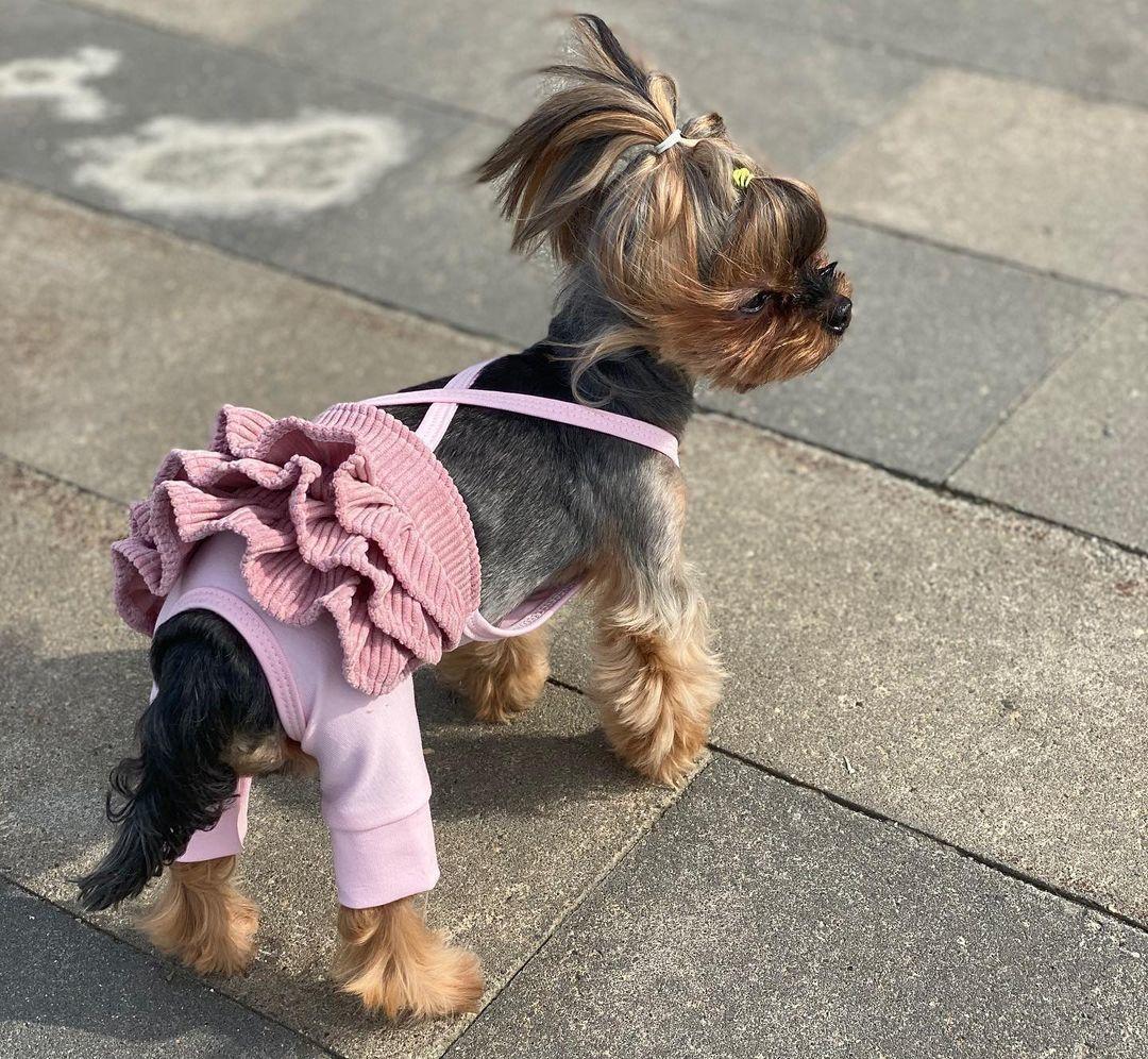 077-20 LM - Штанишки с юбочкой для собак