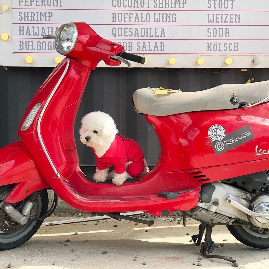 костюм для собаки купить в москве