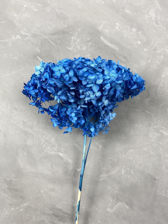 Гортензия на ветке синяя