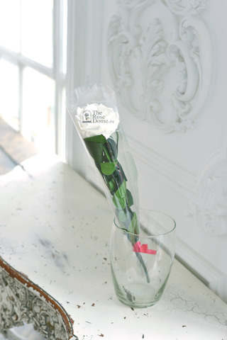 Роза на стебле King Оптом Высота*Бутон (50см*7-8см) Цвет белая
