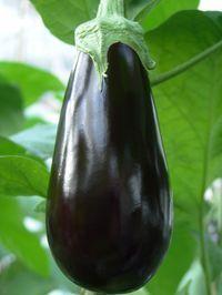 Баклажан Багира F1 семена баклажана (Гавриш) Багира_семена_овощей_оптом.jpg