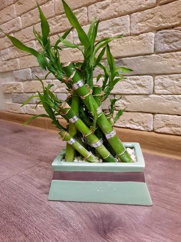 Бамбук лаки в керамике 12|45