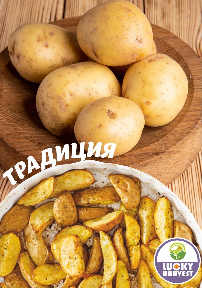 Семенной картофель ТРАДИЦИЯ ТМ LUCKY HARVEST (Украина)