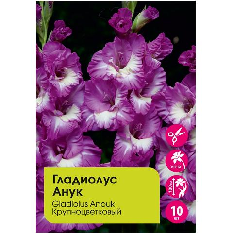 Гладиолус Анук крупноцветковый 10шт