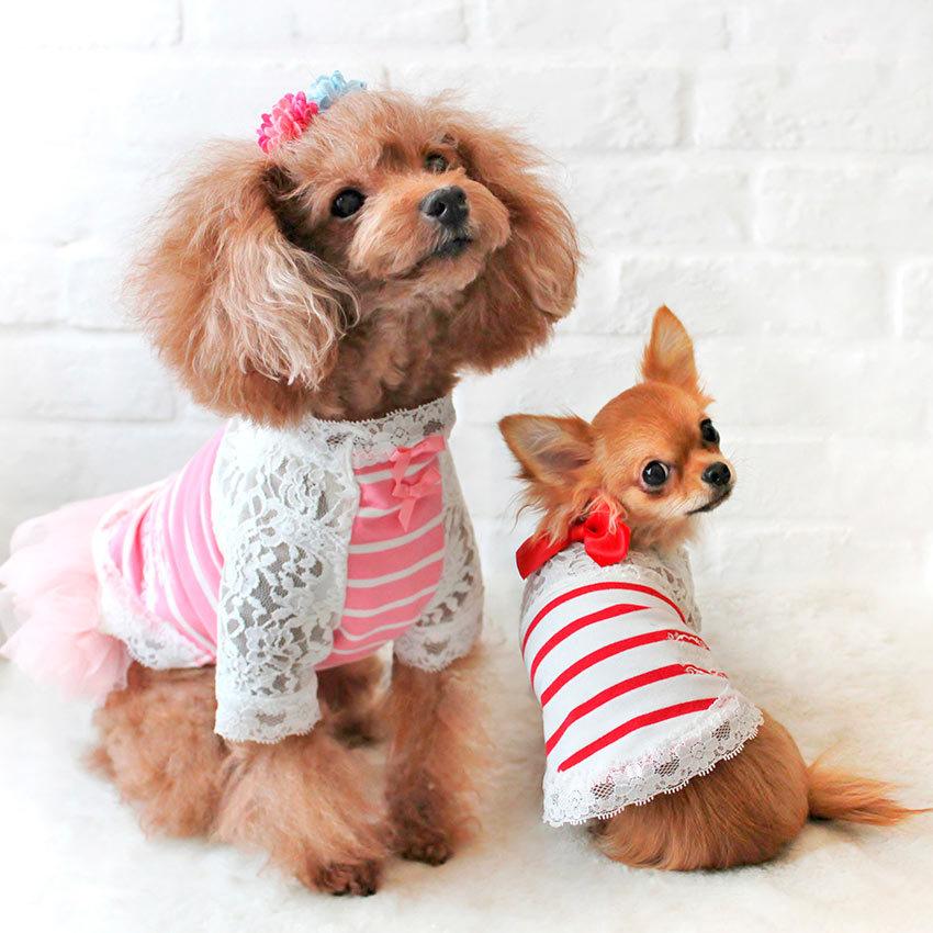 Элитная одежда для собак